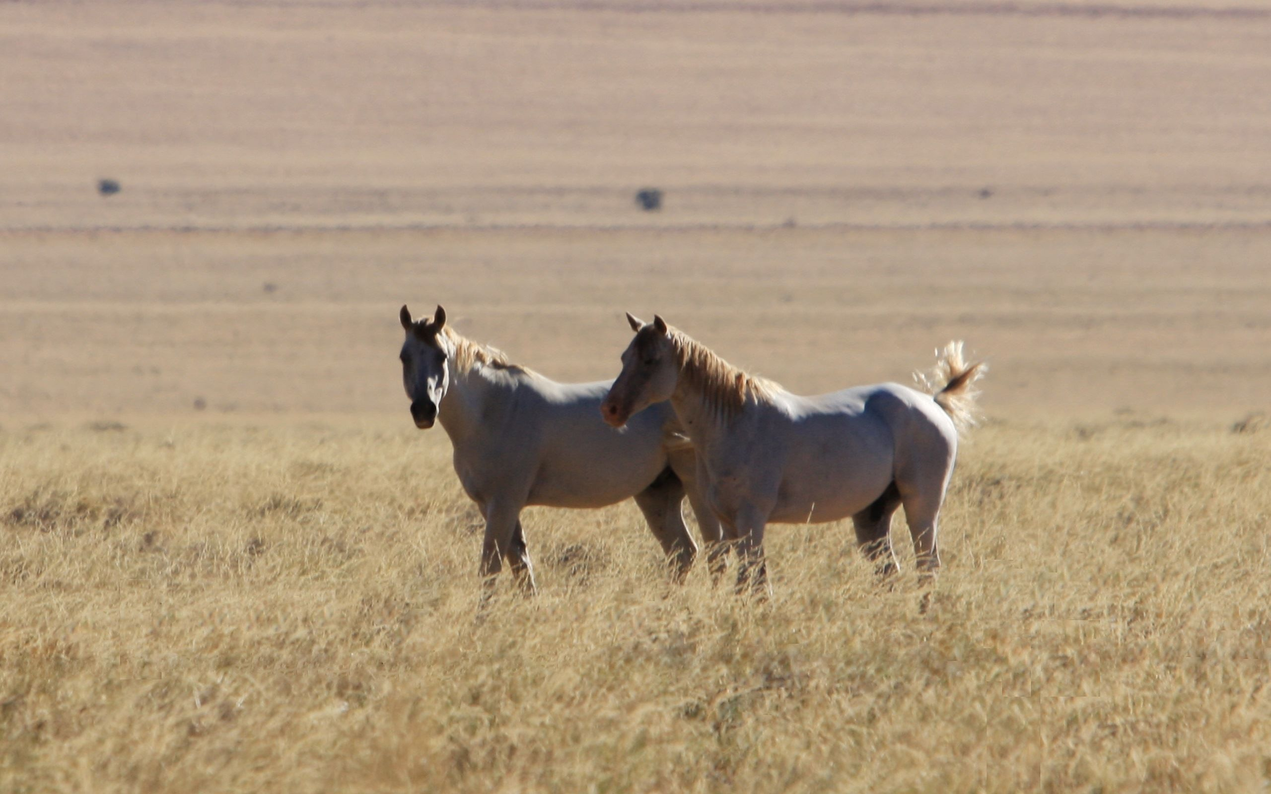 Spiele Kostenlos Pferde