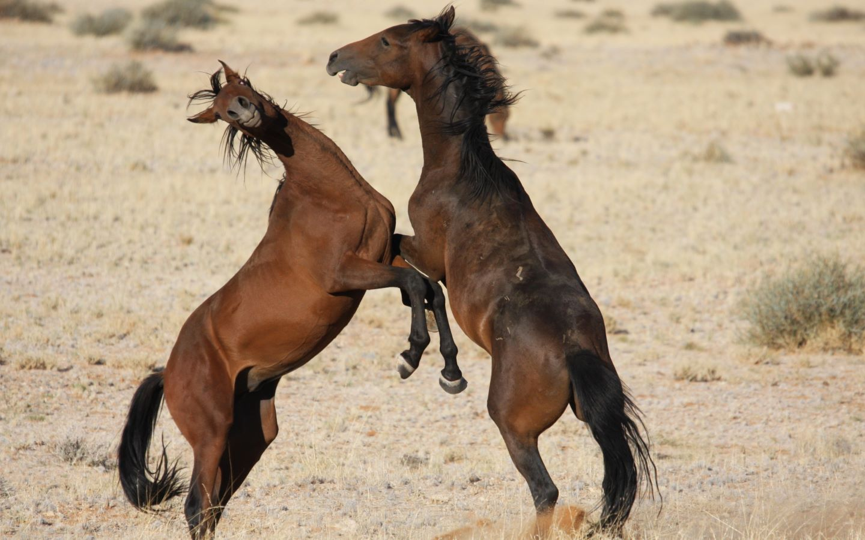 hintergrundbilder pferde