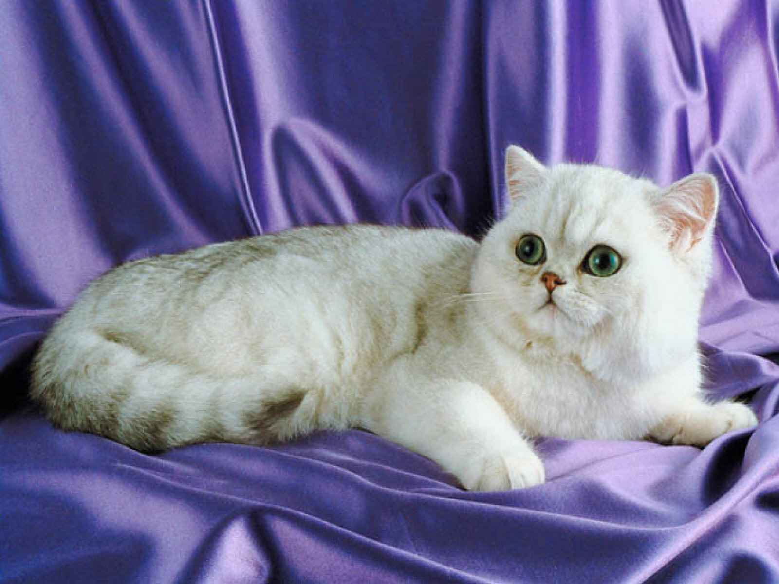 Лучшие фото природы и животных, прикольные фото - Фото кошек - Лучшие фото животных...