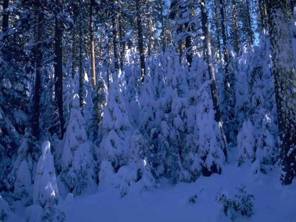 winter desktopbilder kostenlos runterladen