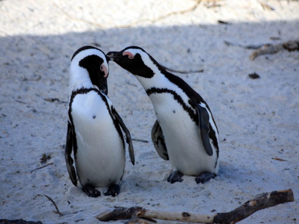 www pinguine de